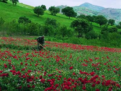 كوردستان … فهرهاد ئهحمهد بهرزنجی